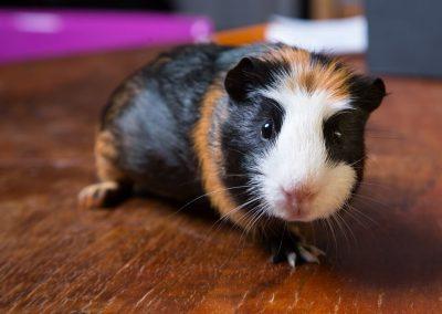 swinka-zwierzogrod-stezyca